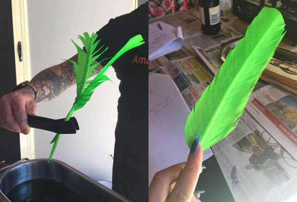 green dyed feathers
